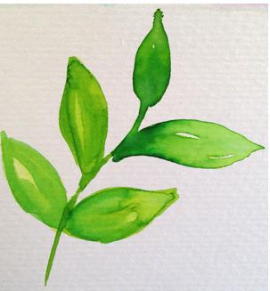 sprigs_leaf2